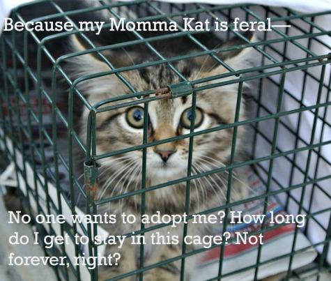 kitten-worries