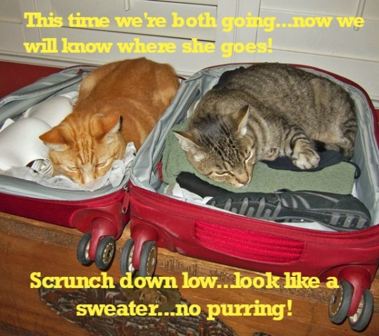 traveling-cats