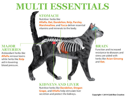 graphic-for-multi-essentials-s