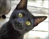 kitten12-ed-s