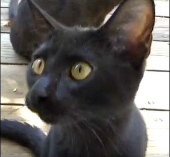 kitten5-ed-s