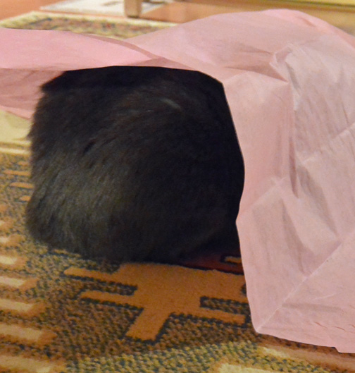 Be honest—does this tissue paper make my butt look really big??