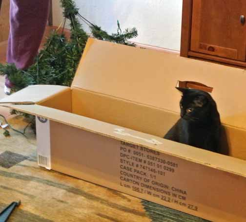 Dad P, I'm not sure this is the box for the tree?