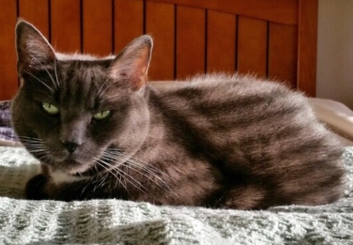 I think my new Tabby Cat Stripes look wonderful on my gray furs