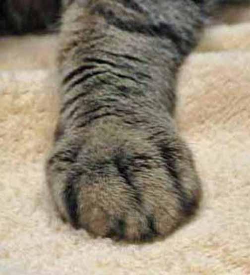 Don't make me smacky paw you!