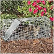 cat trap 4