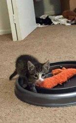 See ill kitten in closet?