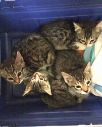 Five tabbies who made it