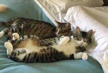 Snuggle buddies for life