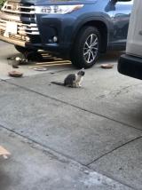 kitten at Jans